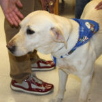 public-health-system-receives-first-in-residence-therapy-dog-1